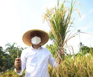 Pemkot Surabaya Terus Manfaatkan Lahan BTKD untuk Perkuat Ketahanan Pangan
